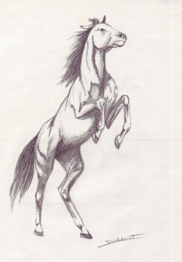 Images dessins - Cheval dessin couleur ...